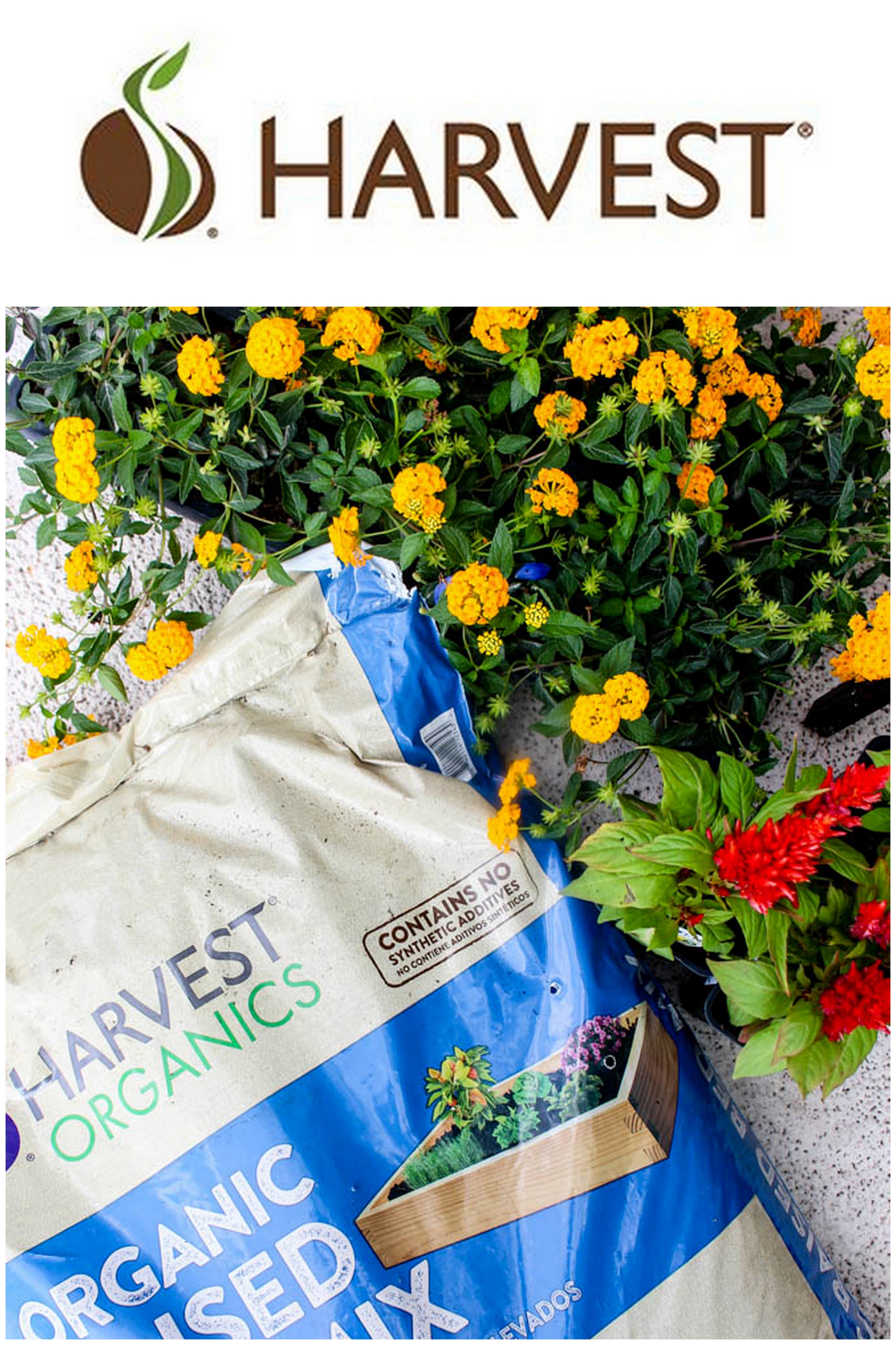 Diy raised garden boxes with organic soil within the grove for Harvest organic soil